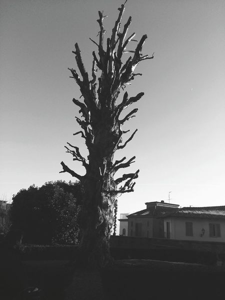 Tree No People Sky Day Bare Tree Outdoors Piemonte Piedmont Italy Govone (CN) Govone  Tree Govone Piemonte
