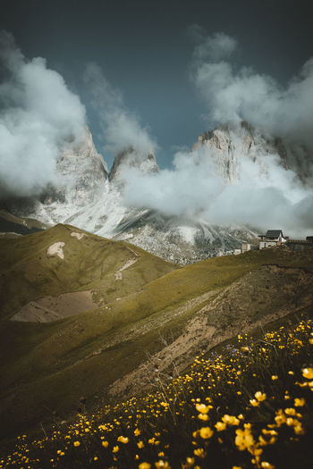 Sella Pass Mountain Beauty In Nature Flower Sky Scenics - Nature Environment Nature Yellow Flowering Plant Landscape Plant Tranquil Scene Cloud - Sky Tranquility Mountain Range Non-urban Scene No People Land Day Outdoors Mountain Peak Snowcapped Mountain Sella Pass Dolomites Dolomiti