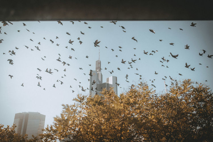 Birds flying in city against sky