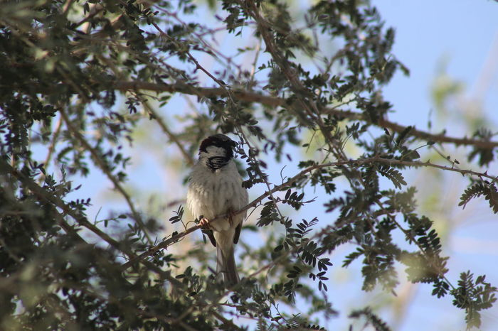 cute little birdie....... Outdoors Nature Animals Tree Beautiful Day Picoftheweek Dslrphotography Wildlife Birds🐦⛅
