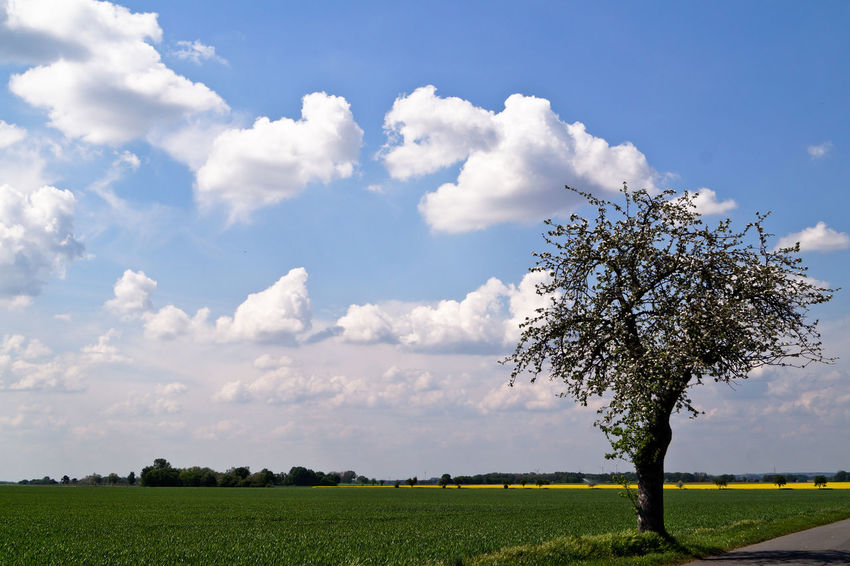 Agriculture Beauty In Nature Cloud Cloud - Sky Cloudy Crop  Day Field Grass Grassy Green Color Growth Horizon Over Land Idyllic Landscape Nature Outdoors Rural Scene Scenics Sky Solitude The Great Outdoors - 2016 EyeEm Awards Tranquil Scene The Essence Of Summer Tree
