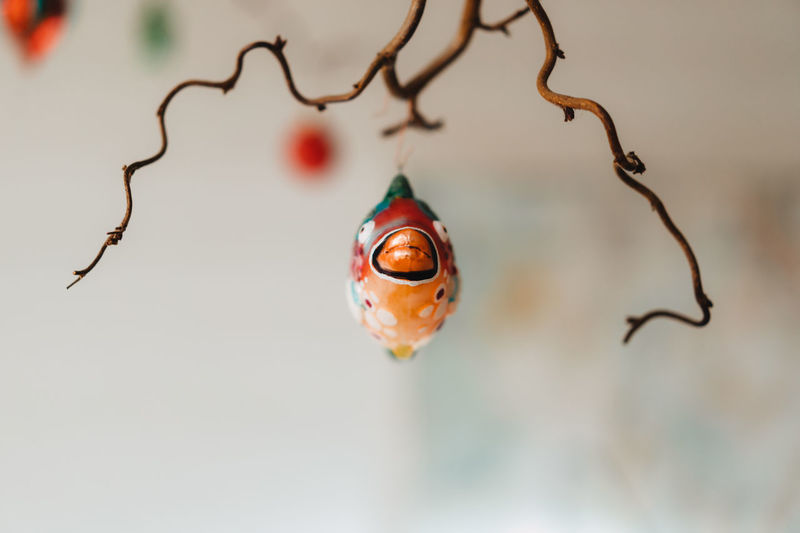 Christmas Decoration Christmas Decoration Christmas Festive Decoration Close-up Focus On Foreground No People Selective Focus Nature Twig Day Red Outdoors Plant Food And Drink Hanging Water Still Life Branch Tree Pattern Wet Drop