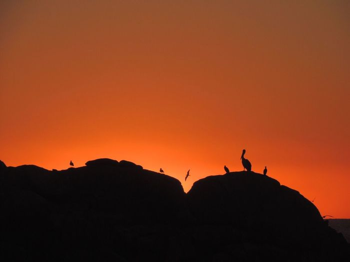 Sunset Sunset On The Rocks Silhouette Orange Sky Sunset Nature Animal Themes Seals Pelicans Rocks And Sky Seagulls Animals In The Wild Sea And Rocks Outdoors Enjoying The View