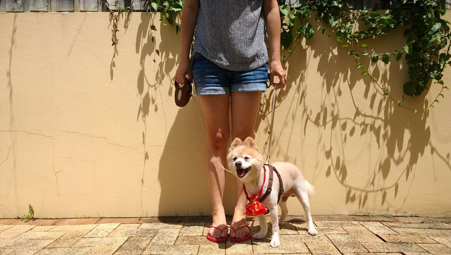 Low Section Of Woman With Dog Standing On Footpath Against Retaining Wall