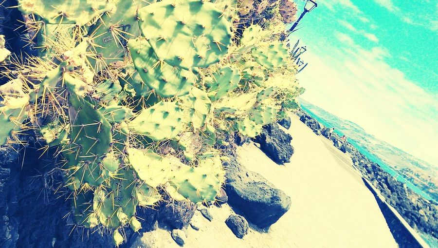 Puerto De La Cruz Holiday♡ Spain♥ Cactus Love Taking Photos Check This Out Enjoying Life Hello World Beautiful Nature
