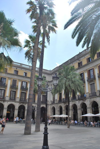 Architecture Barcelona Barcelona, Spain Building Exterior Catalonia Catalunya City Day History Outdoors Palm Tree People SPAIN Square Statue Travel Destinations Tree