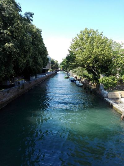 View of canal along trees