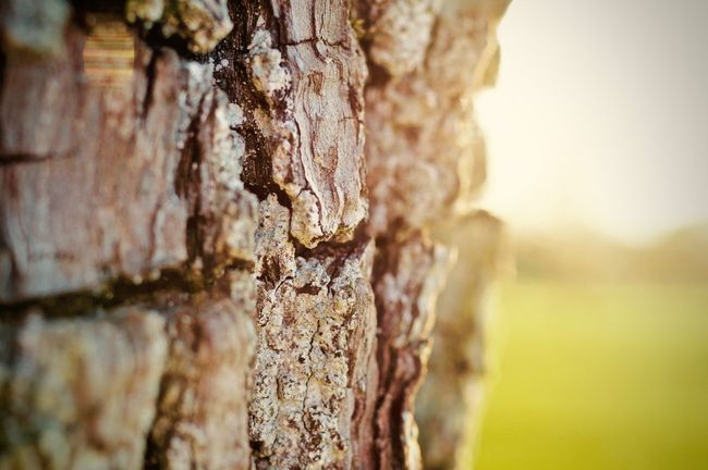 Animals In The Wild Beehive Close-up Day Nature No People Outdoors Rough Textured  Tree Tree Trunk Wood - Material Perspectives On Nature