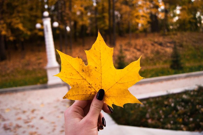 Autumn Season  Yellow Change First Eyeem Photo