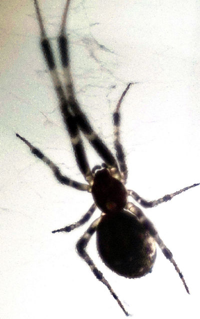 Animal Themes One Animal Close-up Insect Spider Animal Leg No People Shadow Photoshop Ilce5000