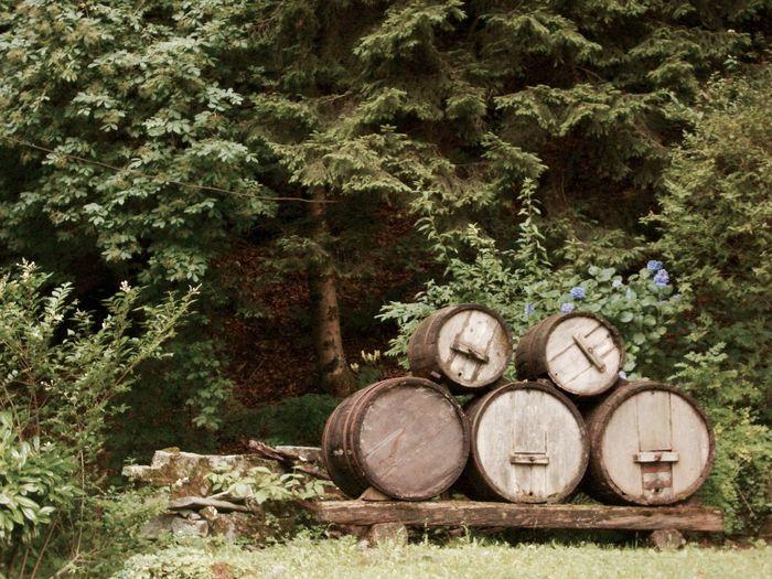 Wine barrels against trees