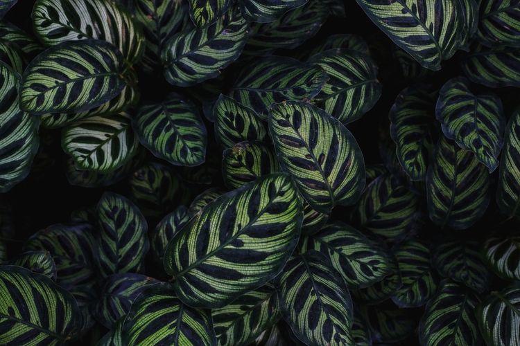 leaf Leaf Vein EyeEmNewHere Backgrounds Full Frame Green Color A New Beginning