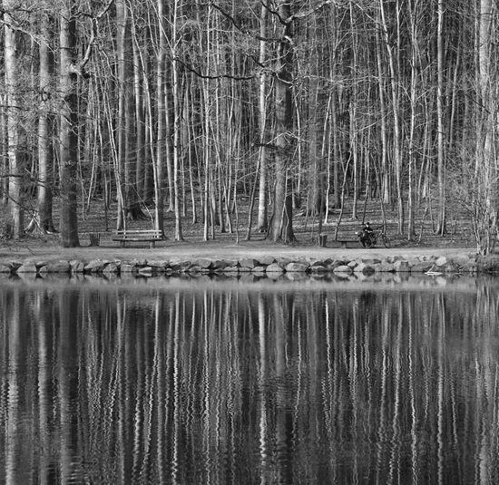 Geduld ist ein Baum mit bitteren Wurzeln, der süße Früchte trägt. Nature Beauty In Nature Water Tree Outdoors Day Pattern Germany🇩🇪 Black And White Blackandwhite Photography People Nature Bnw Sony A6000 Weisheit One Person Frankfurt