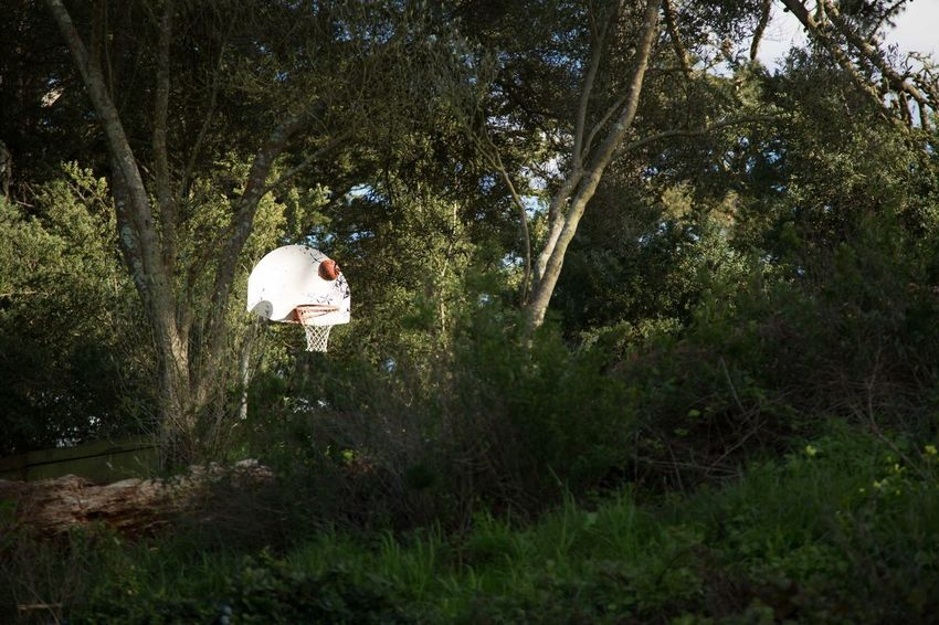Basketball Hoop USA Photos Beauty In Nature Califonia Day Forest Growth Nature Outdoors Tree