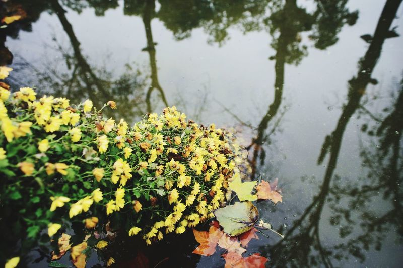 Nature Flower Water Beauty In Nature Plant Tree Leaf