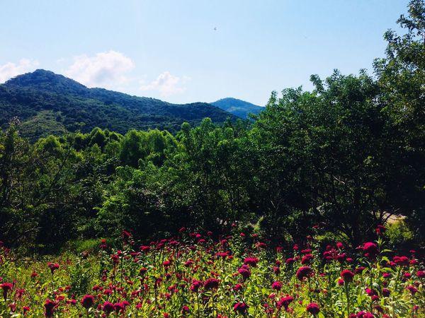 Beauty In Nature Nature Vegetation Flower Paisaje Natural