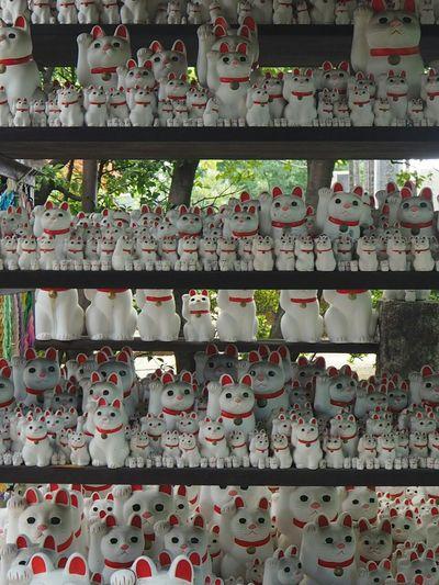 Manekineko Cat Taking Photos Relaxing Landscape Streetphotography Walking Around Japanese Temple Cute Cats Cute まぁ、皆見てますよね(笑)。