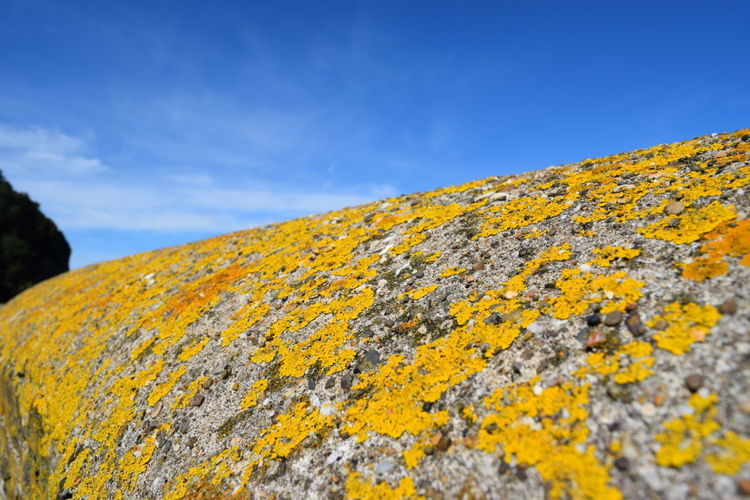 Low angle view of lichen on rock against sky