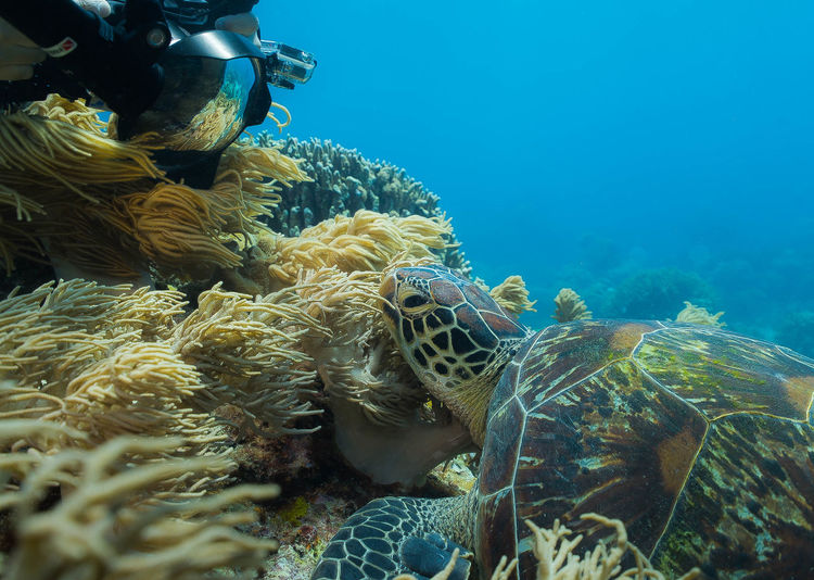 Close-up of sea turtle by coral in sea