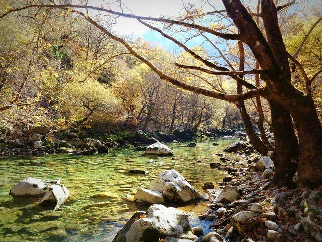 Forest Greece River Vikos Zagoroxoria,greece