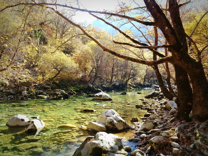 Forest Greece River Vikos Zagoroxoria,greece