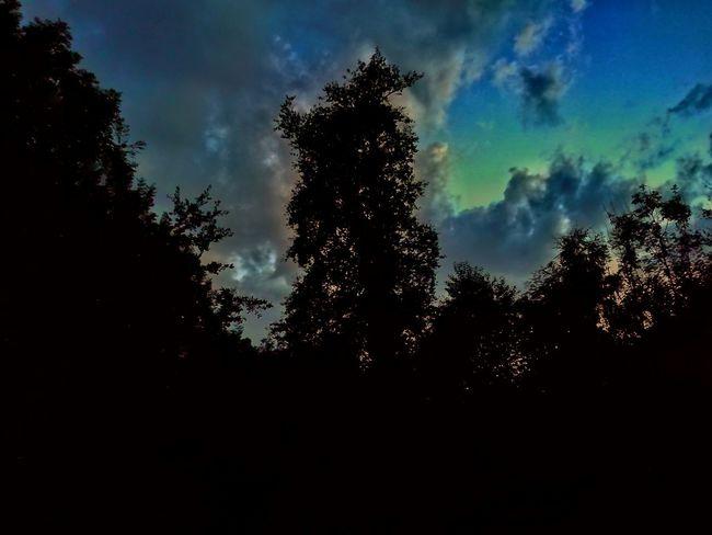 Nightfall Forest Colour Of Life Switzerland
