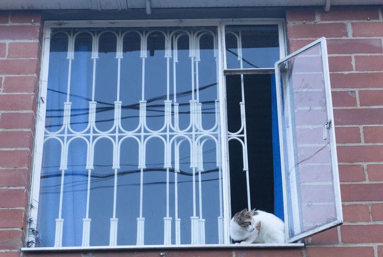 Cat looking through window of building