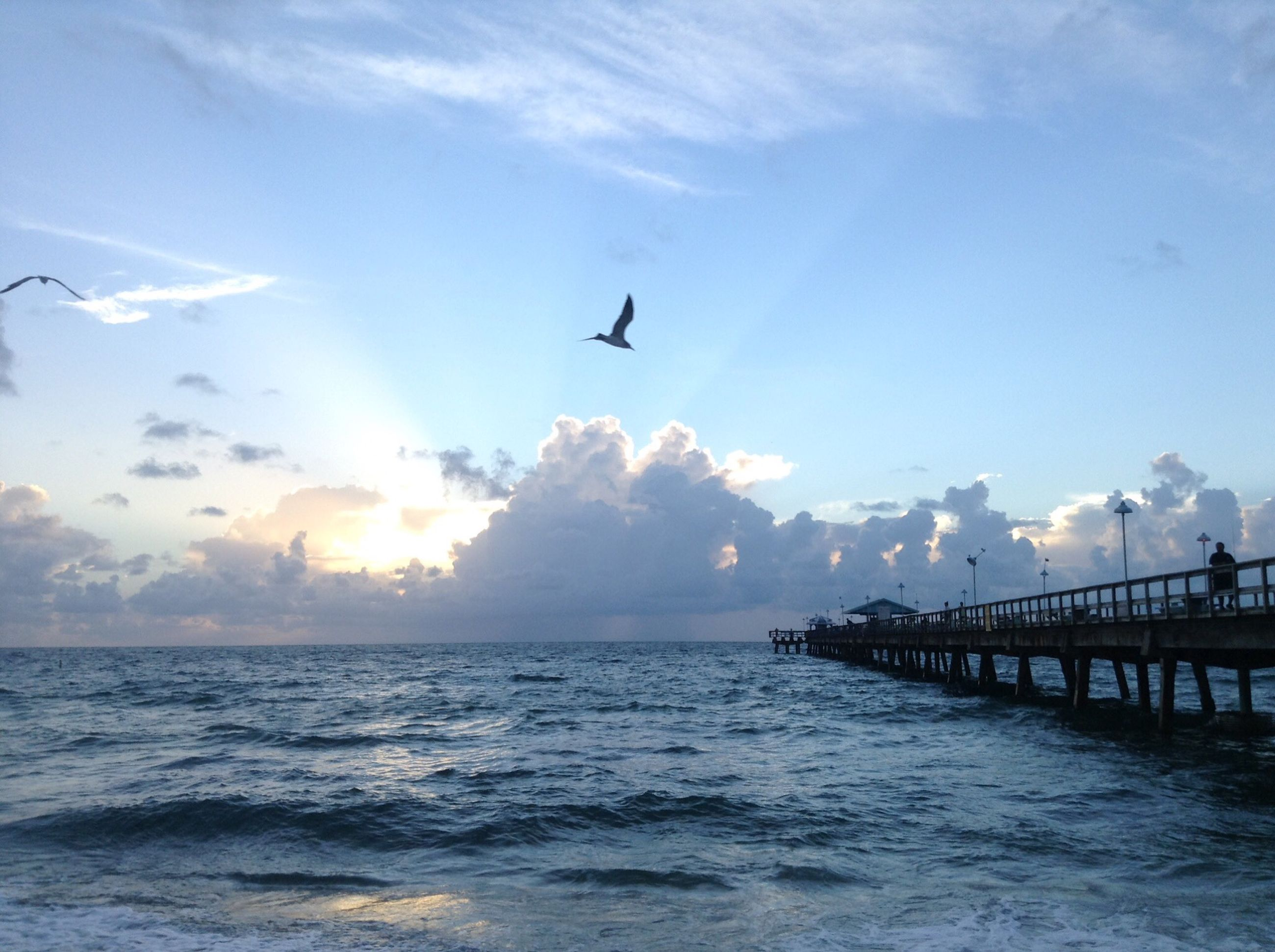 sea, water, bird, sky, flying, horizon over water, animal themes, scenics, waterfront, beauty in nature, wildlife, sunset, one animal, built structure, sun, nature, cloud - sky, tranquility, animals in the wild, tranquil scene