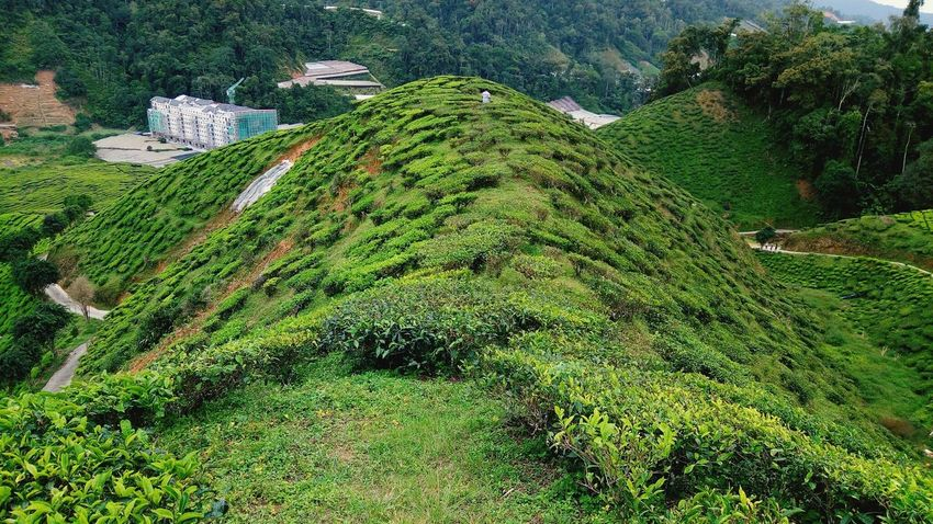 One tea hill. Cameron Highland, Malaysia Architecture Cloud - Sky Travel Destinations EyeEmNewHere Teavalley Malaysia Scenery Cameronhighland