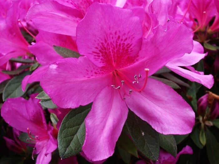 Flower Rome Italy🇮🇹 Pink Color Nature Close-up Petal Pink Pink Flower Pretty Pink  Travel Beauty EyeEmNewHere