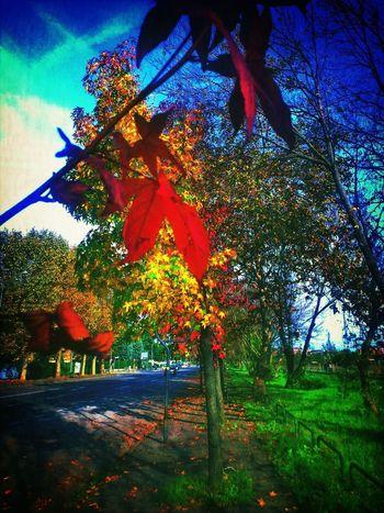 TreePorn Park Colors Of Autumn Autumn Trees