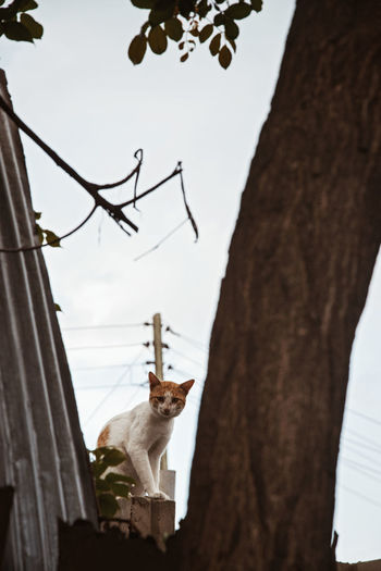 Cat One Animal Mammal Tree Domestic Animals Domestic Low Angle View Pets Animal Themes Animal Tree Trunk Trunk Vertebrate No People Nature Sky Plant Day Branch Architecture Outdoors