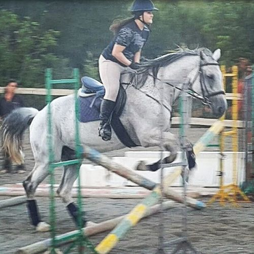 Horse Perfect Lovemyhorse Horsestagram Horsefollowers Horseaddict Instahorse Tagsforlikes Like Cavalli Equine Equestrianlife Littlejump Horsegirl