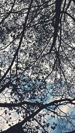 Enjoying Life Japan Steel TowerLC Tree (。◕‿◕。)