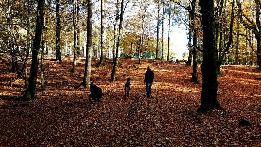 Autumn in Denmark 🍁🍁 Tree Landscape Outdoors Nature Forest Autumn Clear Sky Walking Woods Nature Photography Dog GrandDanois