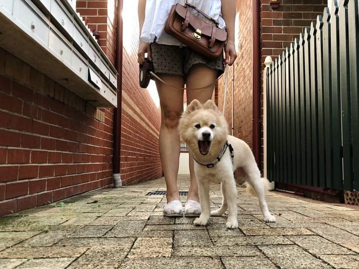Ahhh 😲 🤣 Outdoorisfree Ootd My Dog Is Cooler Than Your Kid. Weekend Activities Self Portrait Dog Love German Spitz Kimba Dog Pets Domestic Animals One Animal Outdoors Animal Themes One Person