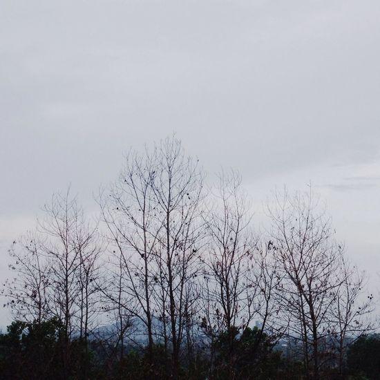 Bare trees against sky