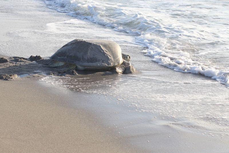 Turtle EyeEm