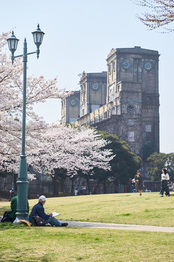 Park EyeEm Best Shots Yokohama Drawing Cherry Blossoms Eye4photography  Sakura Architecture Built Structure Building Exterior Plant Sky Grass Nature Travel Destinations Incidental People Lighting Equipment Real People Day Street Clear Sky Travel Tree Building Street Light City Outdoors