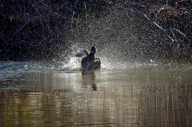 People splashing water in lake
