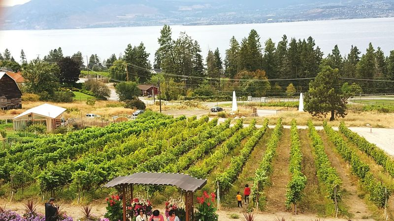 Travel Destinations Scenics Winery Non-urban Scene Wine Country Wine Wine Grapes Wine Growing Winecountry Wine Wineyard Tranquil Scene Tranquility Vacations Nature Tourism High Angle View Outdoors Solitude Majestic Countrylife My Favourite Place My Favorite Place My Favorite Place Live For The Story