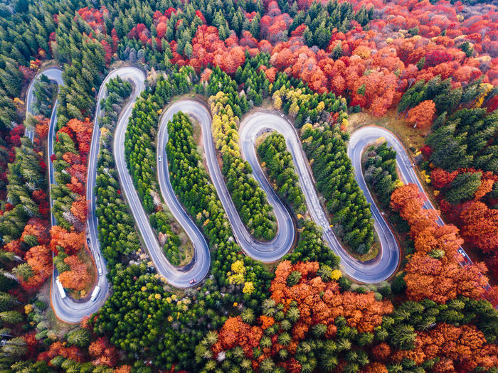 High angle view of multi colored flowering plants on land