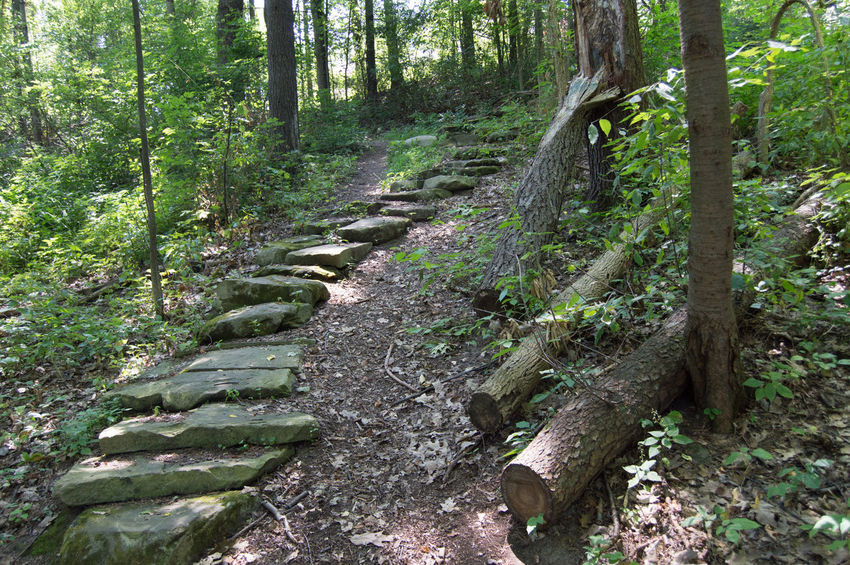 Taken along a nature path. Forest Forestwalk Grass Nature No People Outdoors Path Pebble Rock Stone