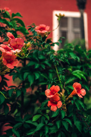 Architecture Beauty In Nature Blooming Building Exterior Close-up Day Flower Flower Head Fragility Freshness Growth Leaf Nature No People Outdoors Plant Red Tropical Tropical Plants Vibrant Color