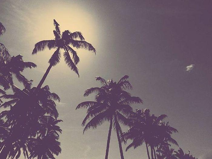 Blue Suede Palm Shade Maui Palmtrees Beach Paia Baldwinbeach Blackandwhite Mobilephotography Vscocam Vscophile Luckywelivehawaii Aloha 808  Sun Summer