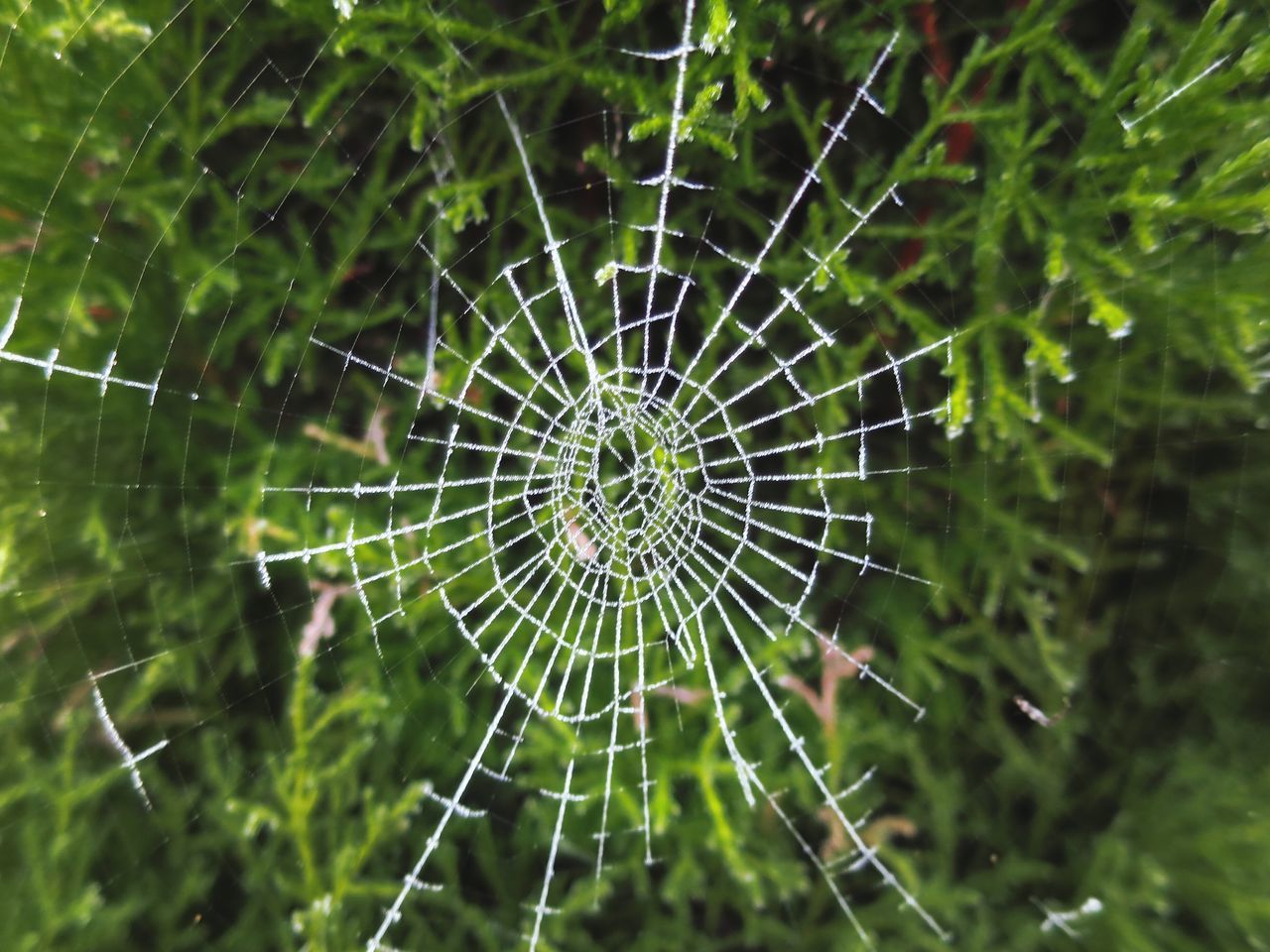 SPIDER ON WEB AGAINST BLURRED BACKGROUND
