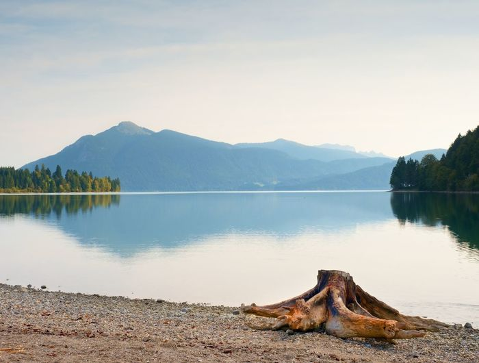 Evening shore of alps lake. beach with dead tree stump. autumn at pond, hills and mountains