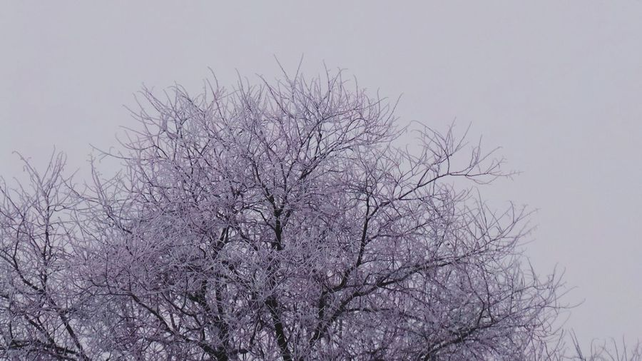 Bare Tree Tree Branch Nature No People Sky Outdoors Beauty In Nature Cold Temperature Snow Frosty Mornings Full Frame Abstract Photography Frozen Frost Backgrounds Frosted Branches Beauty In Nature Snowing Low Angle View Winter Tranquility Growth Endurance Strength