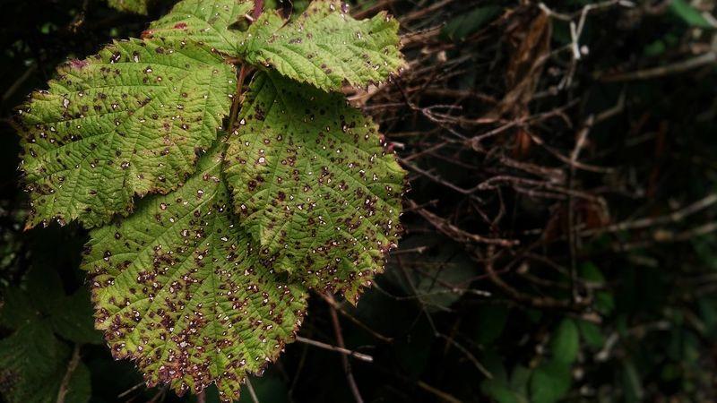 LAST 2016 Herbstbeginn Blättersterben Blätter Dying Sterben Tot Death Dying Forest Forest Waldsterben Wald