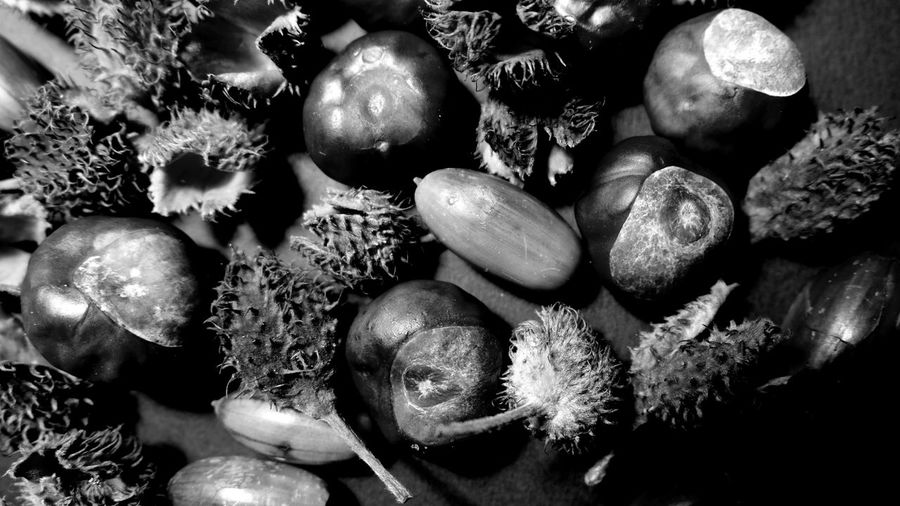 autumn Fruits Of Autumn Silence Natural Structures Blackandwhite Atmospheric Mood Still Life Pattern, Texture, Shape And Form Structures In Nature Botanical Material Mix Structures EyeEm Best Shots EyeEm Nature Lover EyeEm Selects EyeEm Best Shots - Black + White EyeEm Masterclass Monochrome No People Full Frame Backgrounds Close-up